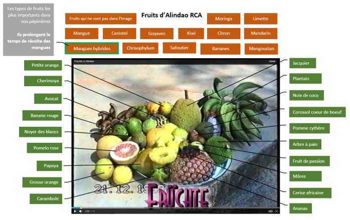 Fruits d'Alindao FR