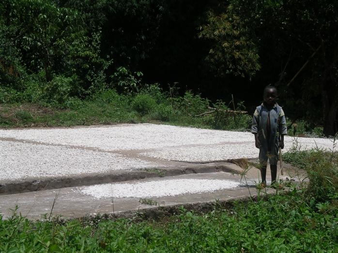 Maniok trocknen