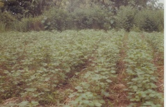 Utilisation de soja ...