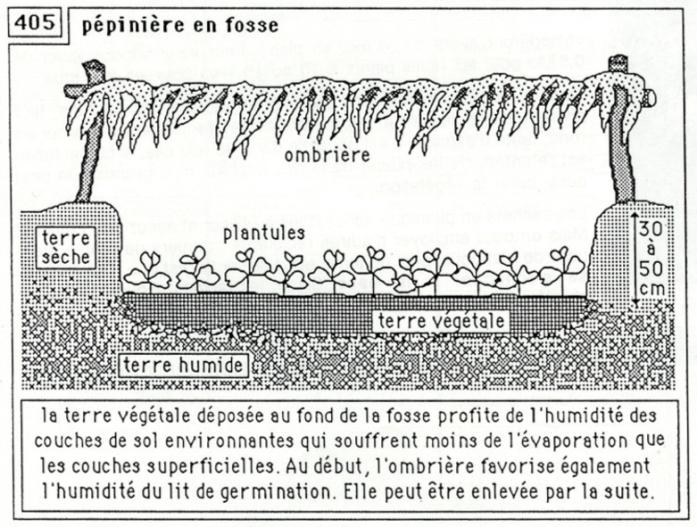 pépinière en fosse