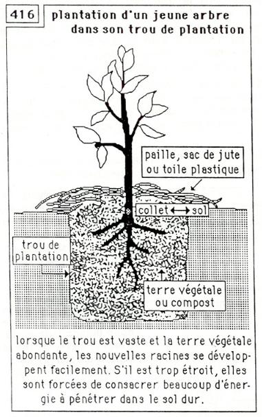 plantation jeun arbre