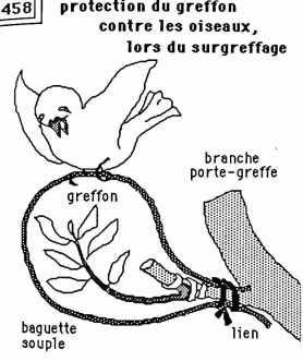 pretection contre les oiseaux