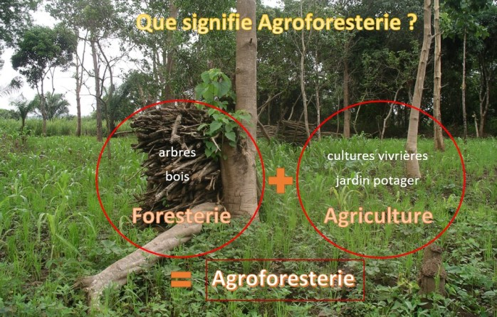 Definition Agroforestery